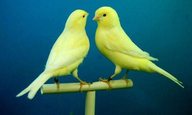 Com saber si un ocell és feliç