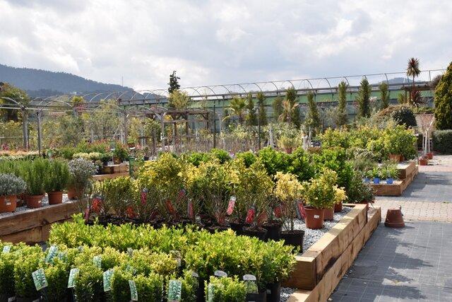 Bienvenida la primavera v vela en tu jard n garden for Jardineria barcelona centro