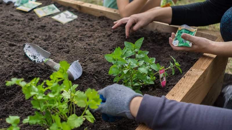 Huerto urbano en espacios reducidos: cómo cultivar y porqué
