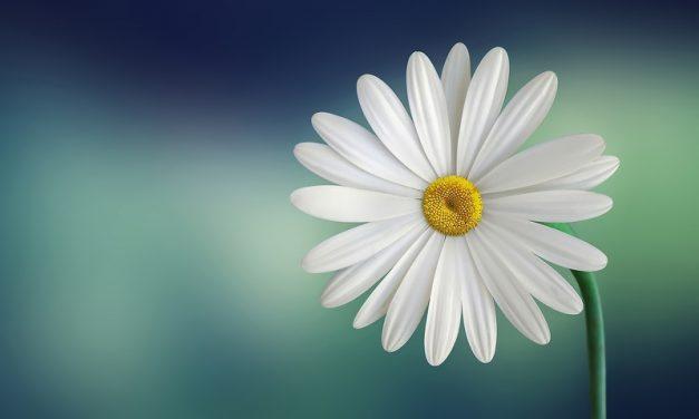 En primavera decora tu hogar con flores frescas