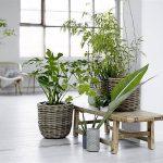 Consejos para decorar tu hogar con plantas