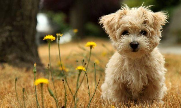 4 cosas a tener en cuenta antes de comprar un perro