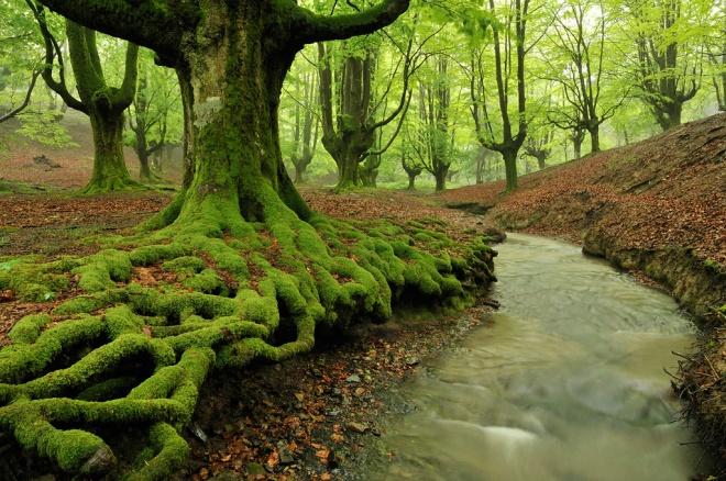 El hayedo – El bosque más bello