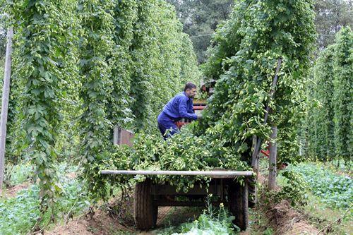 L pulo el toque amargo de la cerveza garden center for El jardin del lupulo