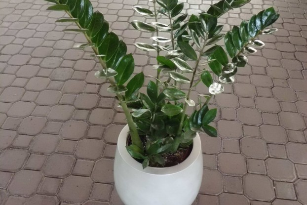 Nombres de plantas de jardin dise os arquitect nicos for Plantas de interior fotos y nombres