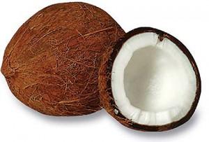 El Cocotero – Coco nucifera