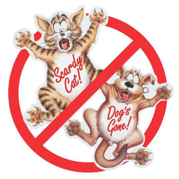 Coleus canina – Repelente de perros y gatos