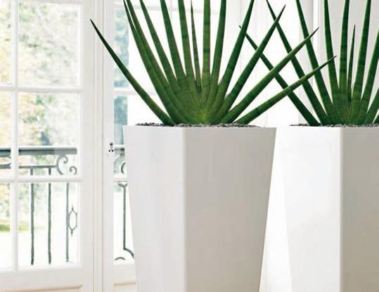 2012 junio garden center catalunya plants de barcelona - Plantas decorativas de interior ...