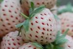 fresas-con-gusto-a-piña