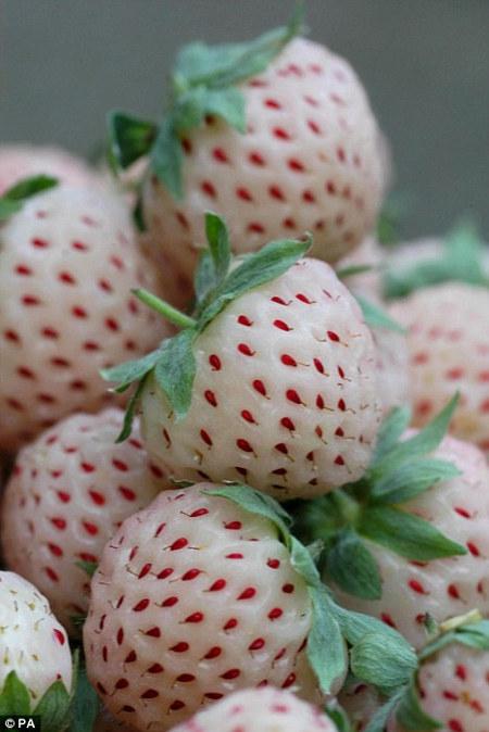 Pineberry – ¡Fresas con sabor a piña!