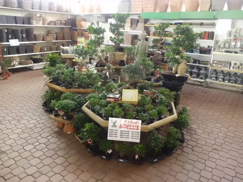 Super oferta en bonsais para estas navidades garden for Bonsais de interior