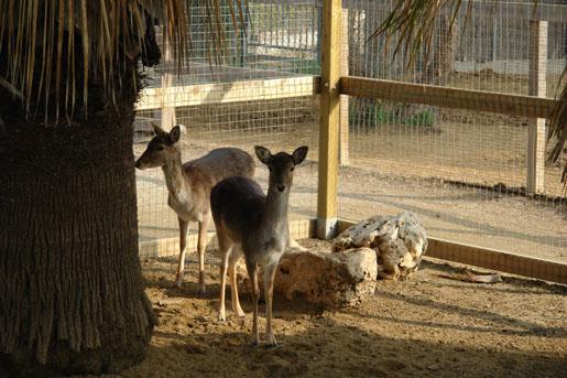 Ciervos del parque infantil del Garden center Catalunya Plants