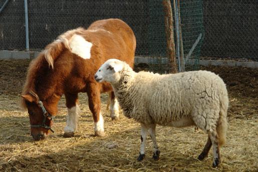 Ponis y ovejas del parque infantil del Garden center Catalunya Plants