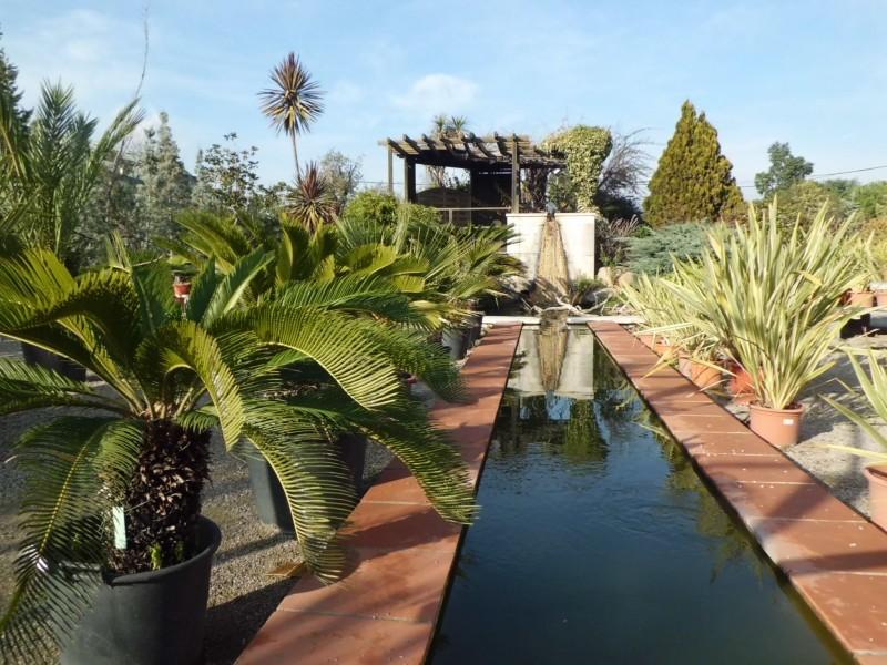 Venta de palmeras en barcelona garden catalunya plants - Palmeras pequenas para jardin ...