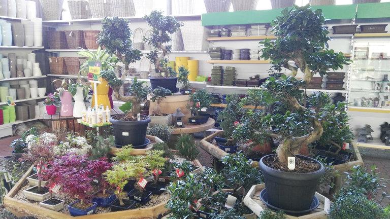 Venta de bons is en barcelona garden catalunya plants for Jardineria barcelona centro