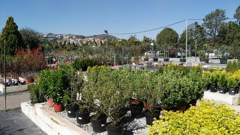 Venta de arbustos en barcelona garden catalunya plants for Arbustos de hoja caduca