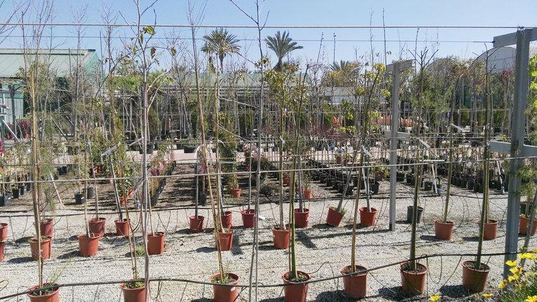 Venta de rboles en barcelona garden catalunya plants for Vivero las magnolias