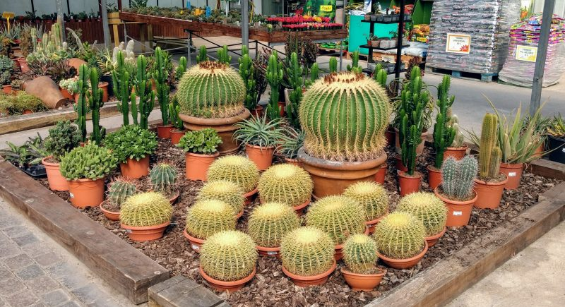 Venta de cactus en barcelona garden catalunya plants for Donde venden cactus