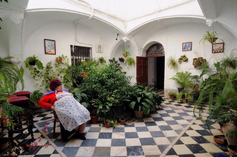 Aspidistra elatior la planta de la abuela garden - Un patio andaluz ...