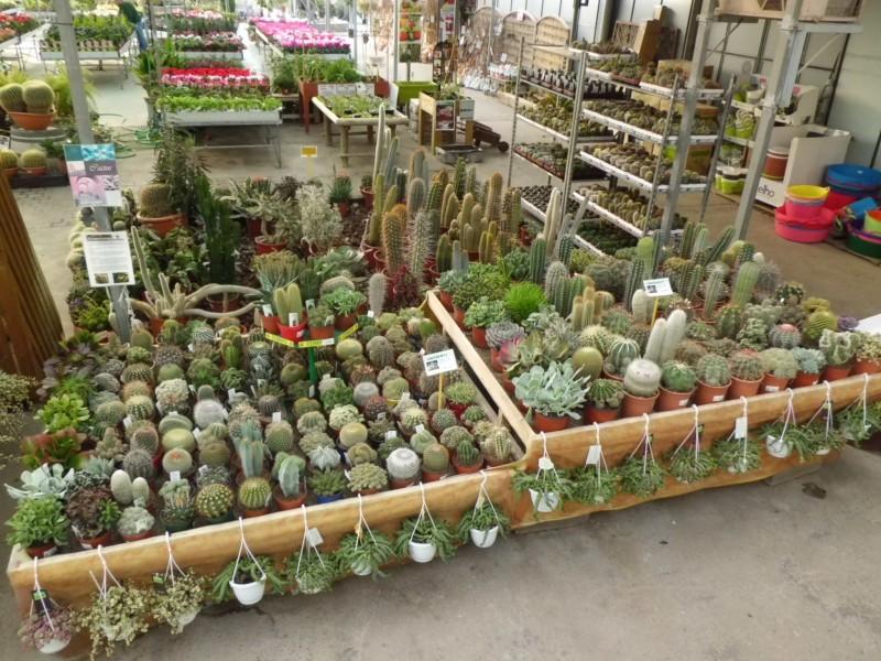 Venta de cactus en barcelona garden center catalunya for Viveros barcelona