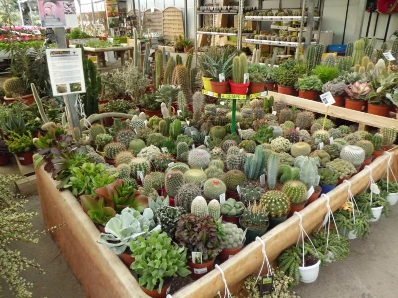 Venta de cactus en barcelona garden center catalunya for Donde venden cactus