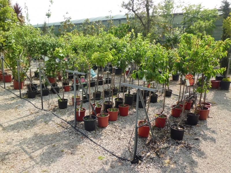 Decoracion mueble sofa precios arboles frutales for Viveros frutales