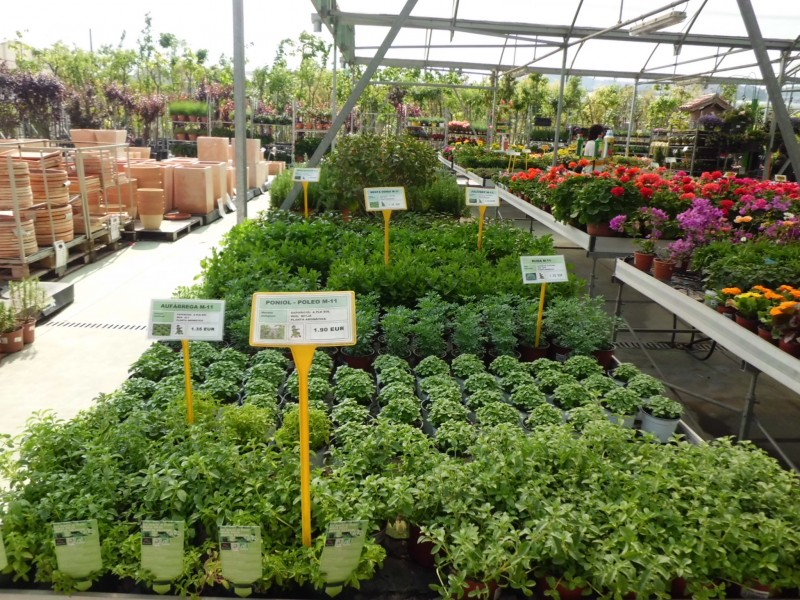 Venda de plantes arom tiques a barcelona garden center for Viveros barcelona
