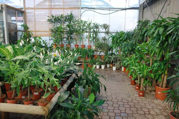 venta de plantas de interior en barcelona garden