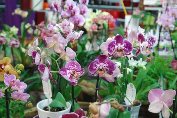 Detalle de la sección de Orquídeas