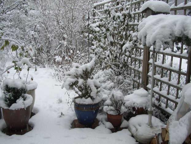 Agenda del jardín, terraza y huerto de ENERO