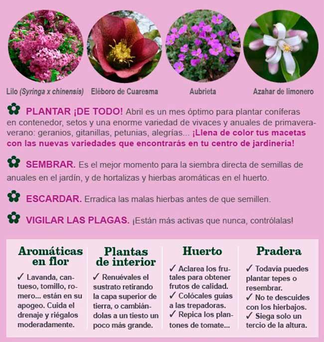 Agenda del jardín, terraza y huerto de ABRIL