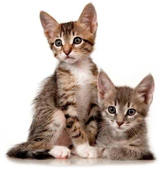 Venda d'aliments i accessoris per a gats.