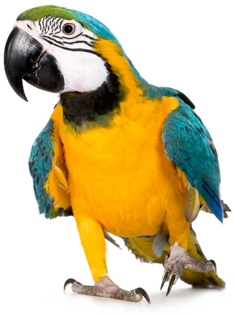 Venda d'aliments i accessoris per a ocells.