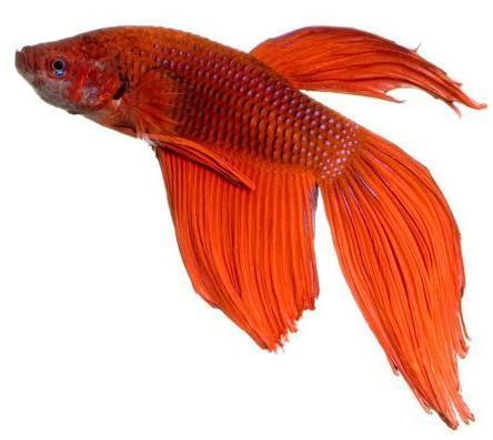 Venda d'aliments i accessoris per a peixos.