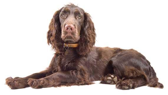 Venda d'aliments i accessoris per a gossos