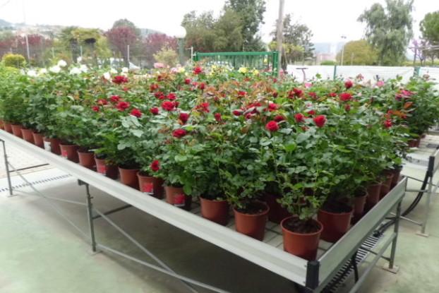 Rosales meilland garden center catalunya plants de for Jardineria barcelona centro