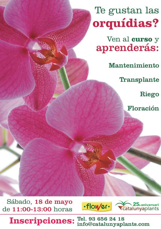 Curso de orquídeas presencial en Barcelona
