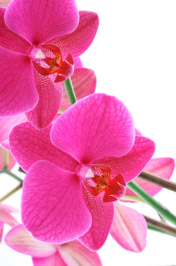 ¿Te gustan las orquídeas? Apúntate a nuestro curso presencial en Barcelona
