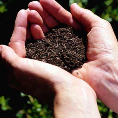 Cómo determinar la calidad de un suelo
