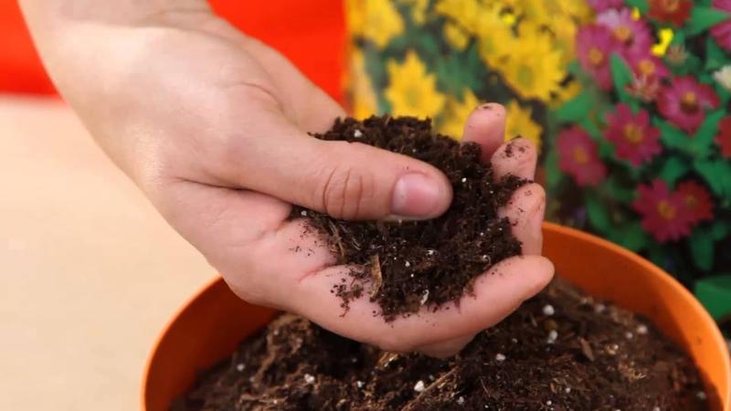 El suelo adecuado para tus plantas