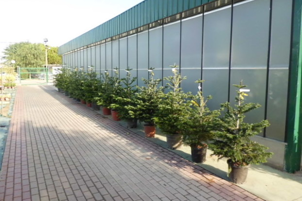 Abetos garden center catalunya plants de barcelona sant for Jardineria barcelona centro