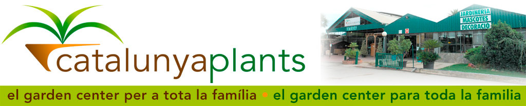 Planta del curry garden center catalunya plants de - Garden center barcelona ...
