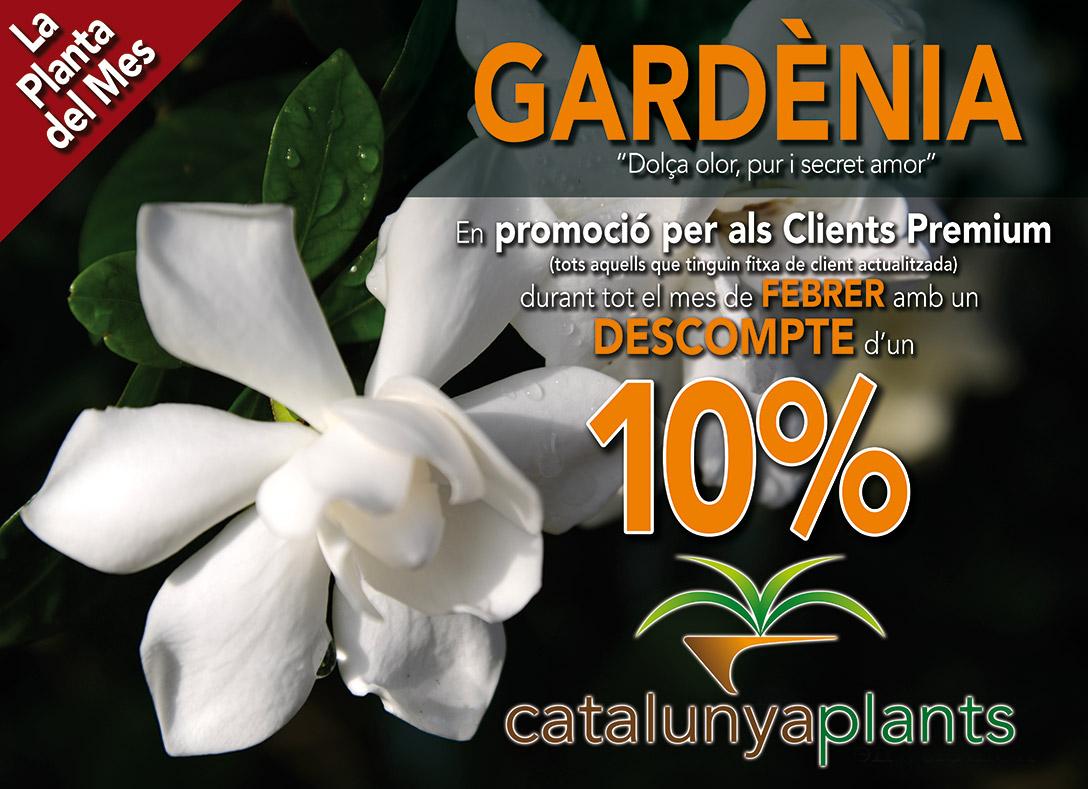 Planta del mes de Febrero: Gardenia con 10% de descuento