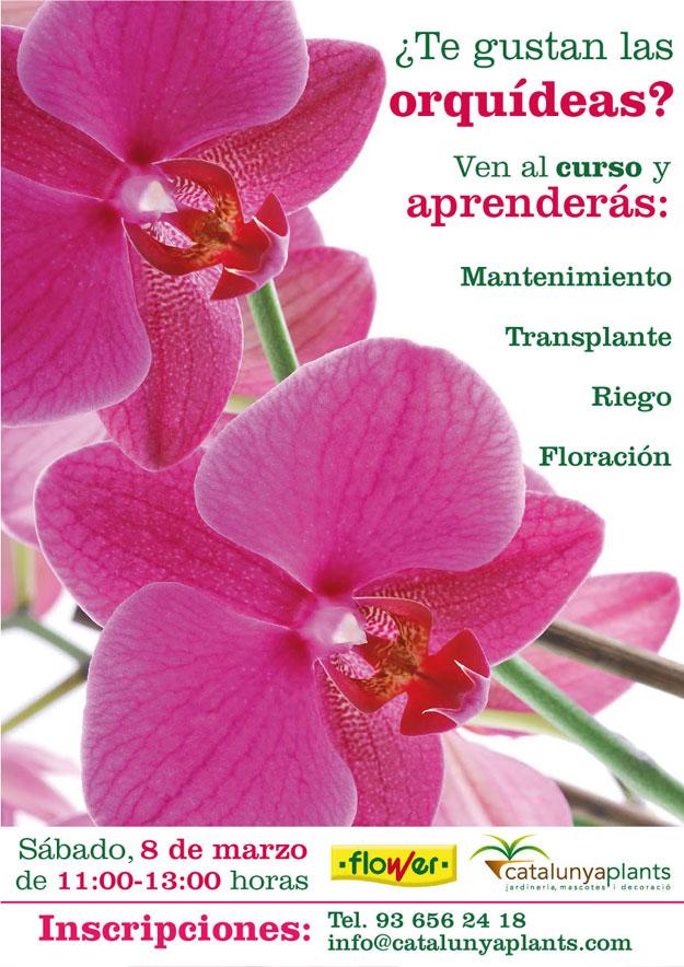2ª jornada curso gratuito sobre las orquídeas. ¡Apúntate ahora!