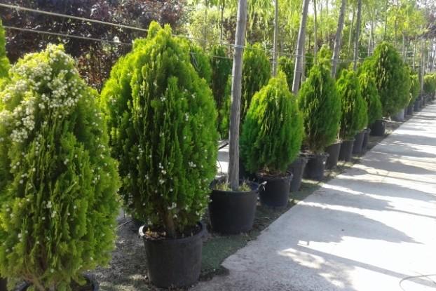 Plantas y jard n garden center catalunya plants de for Jardineria barcelona centro