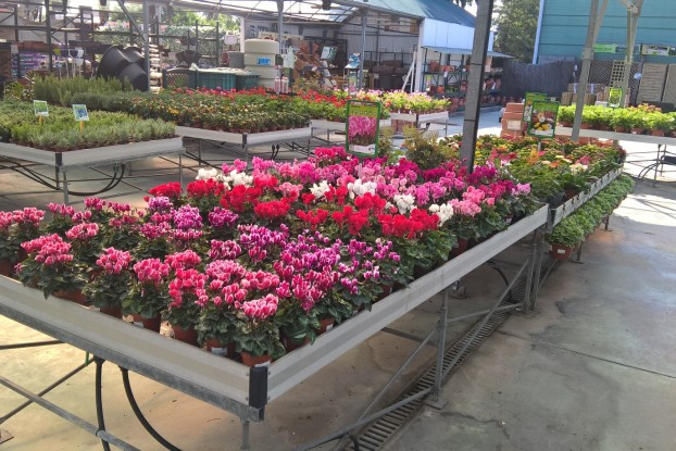 Oto o garden center catalunya plants de barcelona sant for Jardineria barcelona centro