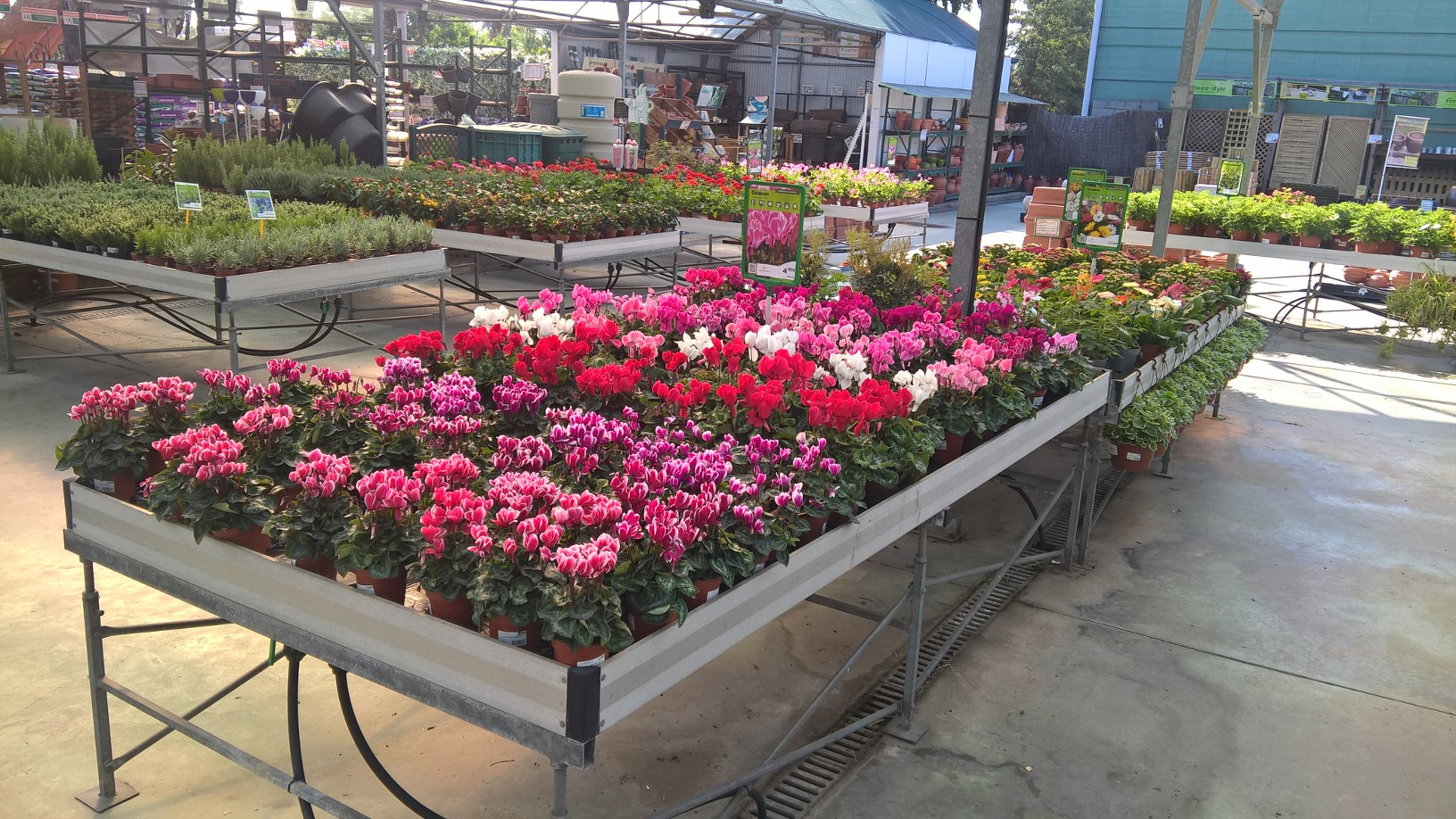 Empieza la temporada de plantación de las flores de otoño – invierno