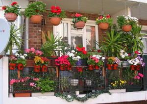 claves-para-cuidar-tus-plantas