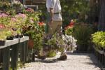 la-compra-de-plantes-de-qualitat
