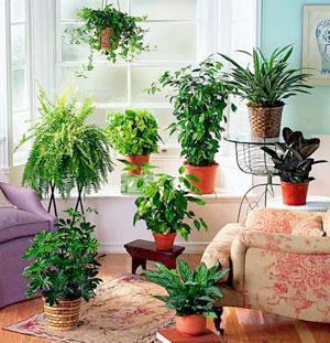 plantas-de-interior-sanas